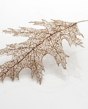 Artist Jenine Shereos' created her leaf series project using human hair. Photo Credit: Robert Diamante. Photo Courtesy of: Jenine Shereos.